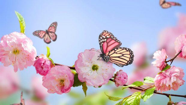 printemps fleurs 2018